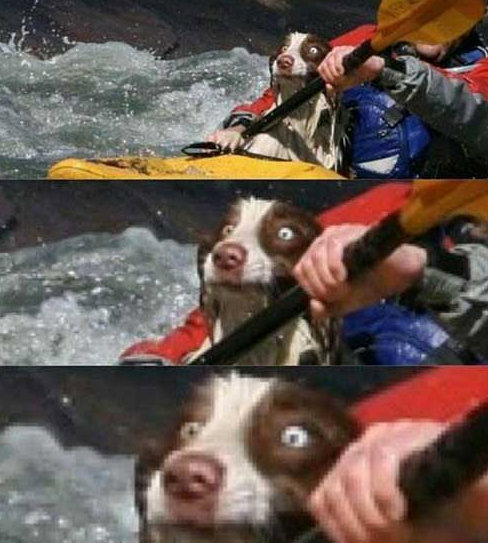 Look of shock on whitewater rafting dog